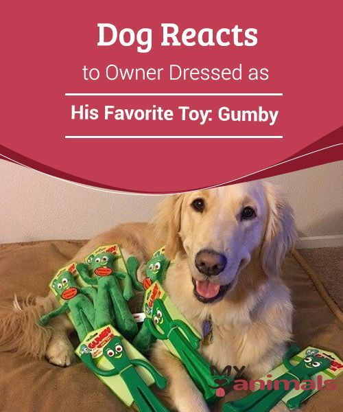 Dog Reacts To Owner Dressed As His Favorite Toy Gumby How Would A