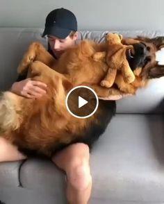 Homem com seu gigante cachorro