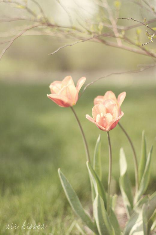 A esperança sempre se renova. Muitas vezes anoiteci achando que era o fim e pela manhã tinha nascido mais uma vez. Rosi Coelho***
