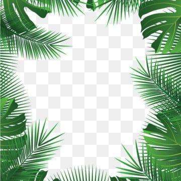 Palm Summer Leaves Tropical Vector Frame Vector Leaves Vector Vector Plant Vector Summer Vector Palm Vect Tropical Frames Tropical Leaves Floral Border Design