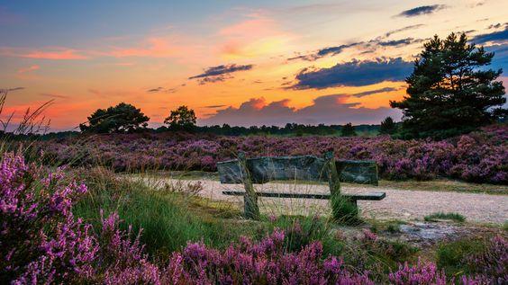 https://flic.kr/p/KKavpp   Heidelandschaft   Heidelandschaft Eendenmeer  Das bei Wanderern beliebte Eendenmeer ('Entensee') in Bergen (NL) ist ein herrliches, wasserreiches Gebiet, das in den letzten Jahren in alter Pracht wieder hergestellt wurde.    Heute ist hier wieder viel Heidekraut und Glockenheide zu sehen. Rund um das Moorgebiet wurde viel Bewuchs weggeschnitten, so dass die Sicht auf das Eendenmeer verbessert wurde. Das nährstoffreiche Moor zieht viele Gänse und Enten an. Rund um…