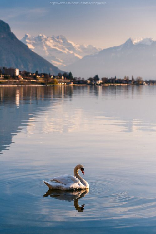 98a283abfc443782f92985f6b611fb22 - Planning The Perfect Trip To Switzerland