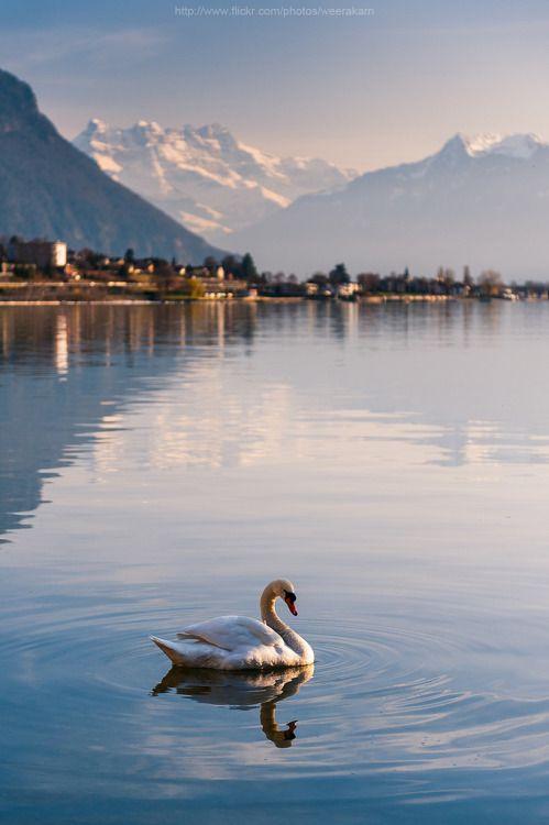 98a283abfc443782f92985f6b611fb22 - Planning The Perfect Trip To Switzerland