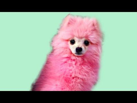Pink Dog Bath Youtube I Love Dogs Dog Lovers Dogs