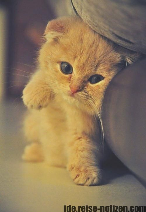 Good Snap Shots Unusual Cat Breeds Thoughts キュートな猫 猫 品種 愉快な動物