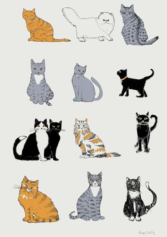 Cats drawings