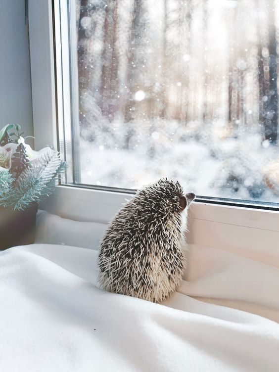 Hedgehog and winter magic outside