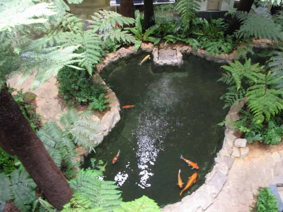 Indoor koi pond with natural touch might want to do this for Indoor pond design