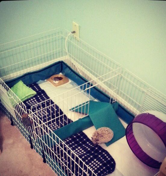 Hedgehog Home ❤️ Guinea Pig Habitat from Amazon.com is perfect with puppy training pads. An area for sleep and food, and an area for play time! Simply change out the puppy pads daily, using Lysol wipes to disinfect!