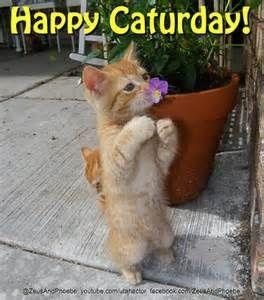 #happysaturday #happycaturday: