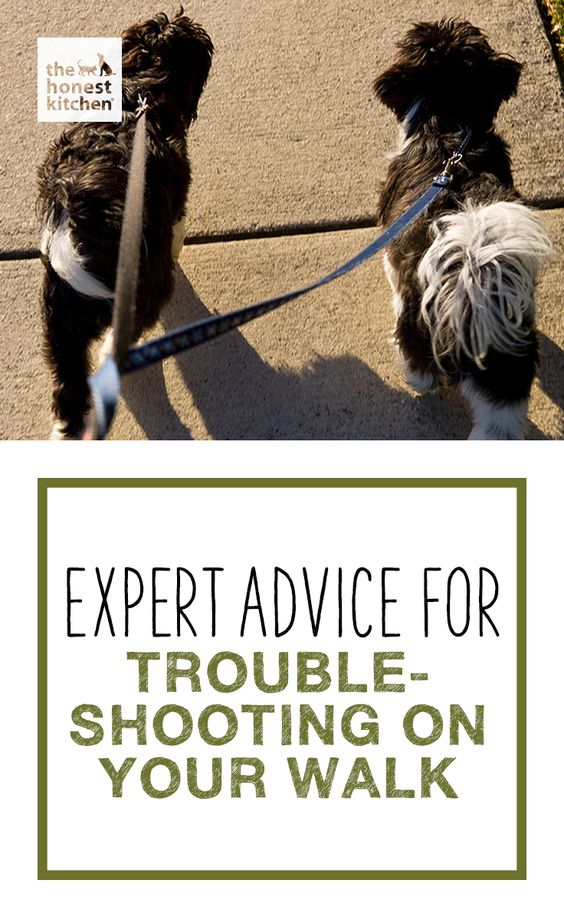 When we go on walks, we don't always have control of the outside environment. Check out some expert tips for a trouble-free.  #THK #honestkitchen #thehonestkitchen #dog #dogs #pets #training #walk #leash #pulling