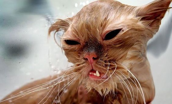 22 Hilarious Pictures Of Wet Cats - BlazePress
