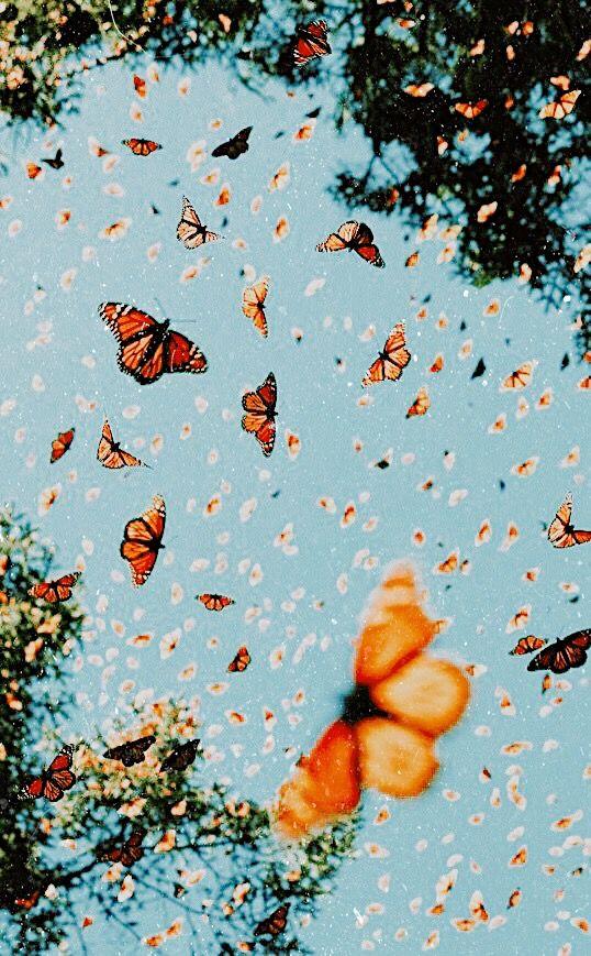 butterfly wallpaper aesthetic