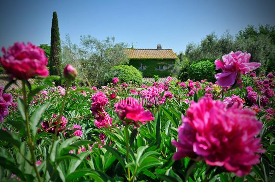 """Un """"Fiore"""" all'occhiello - Officina Visiva  #peonies #flowers #spring #italy #photography"""