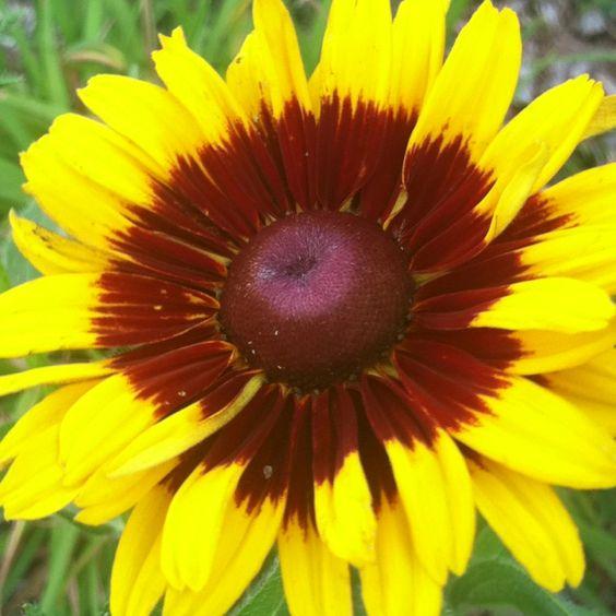 Sunflowers make me smile!