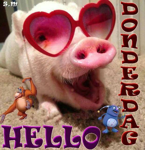 Hello Donderdag