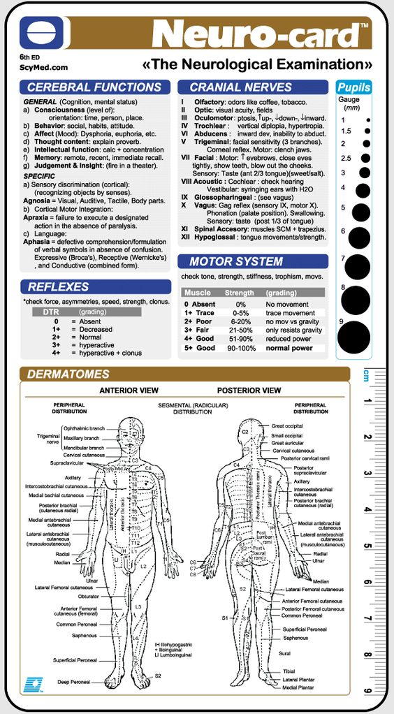 neurological examination | Neurological Examination | Healthcare ...