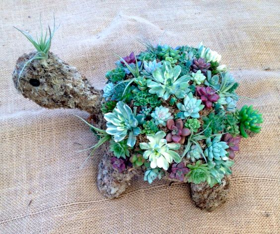 13 Succulent Turtle Perfect addition to by WindmillFloralDesign, $68.00