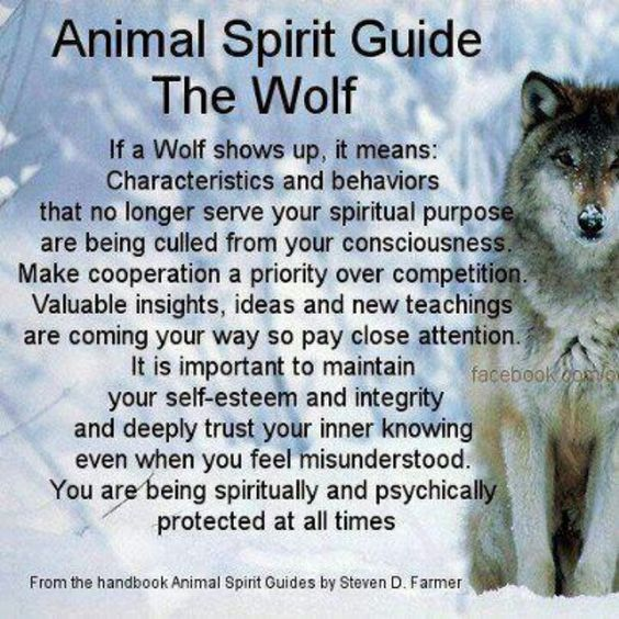 Animal Guide: Your Animal Spirit Guide For Tuesday, Jan. 24th Is The