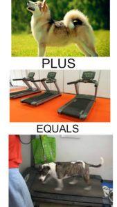 doggie treadmills for sale