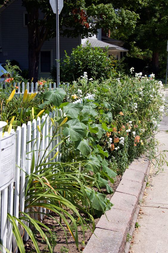 "Front Yard Vegetable Garden | An English cottage garden is basically a garden that mixes perennials and vegetables.  Although it doesn't always.  Sometimes it's just perennials.  Things are grown close together so that when the vegetables come out of the garden, there's still a lot of garden left to look at.  Heights are always varying and there's sort of a ""just thrown together"" look to it.  Which is really hard to do without it looking like it's just thrown together.:"