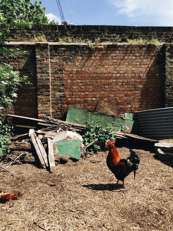 Hackney City Farm, London // Weekend Scenes: May 16th & 17th — Light Rust