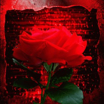 rosa-gif: