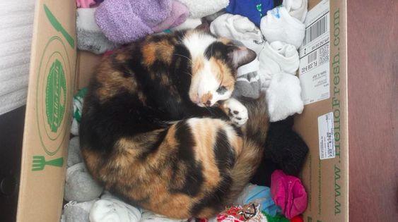 Deixa o gatinho dormir.