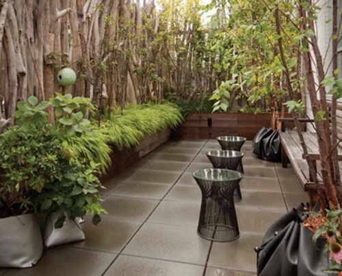 Rooftop gardens the terraces conservatories and for Terrace trees