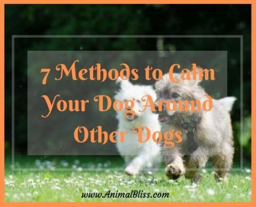 7 Methods To Calm Your Dog Around Other Dogs Your Dog Animal