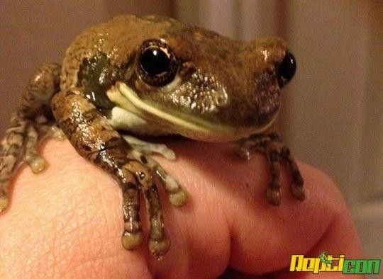 Reptile & Exotic Animal Show Raleigh, NC #Kids #Events | EXOTIC ANIMAL ...