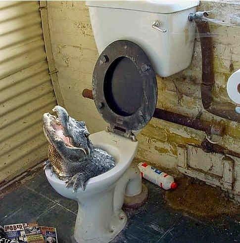 Sewer alligator urban legend