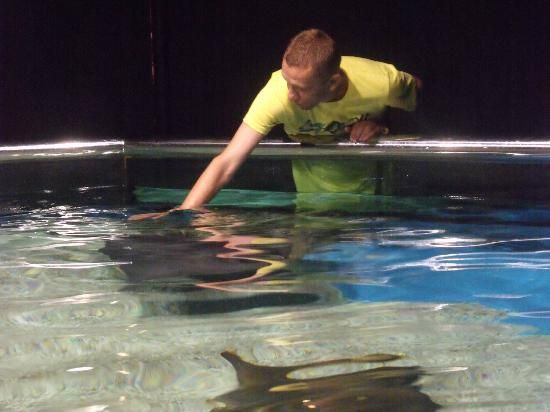 Roquetas de Mar Aquarium: tocando mantas y rayas Roquetas de Mar, Almería #RoquetasdeMar #Andalusia #Andalucia #Spain #EspañaTurismo #TourismSpain