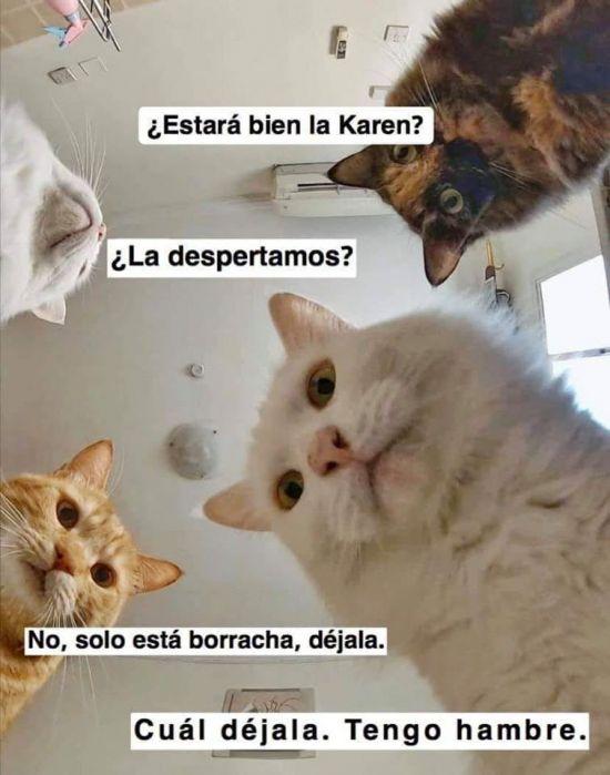 Memes De Karen Y Su Gato Segunda Parte Memes En Espanol La Mejor Recopilacion De Memes Lo Mas Viral De Memes Graciosos De Animales Memes Memes Divertidos