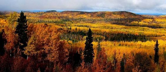 The vibrant fall colurs come alive in Greenstone
