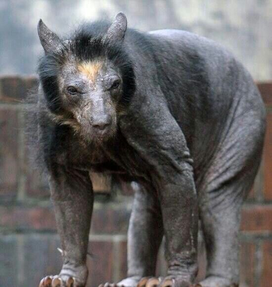 Bear without fur. #scary