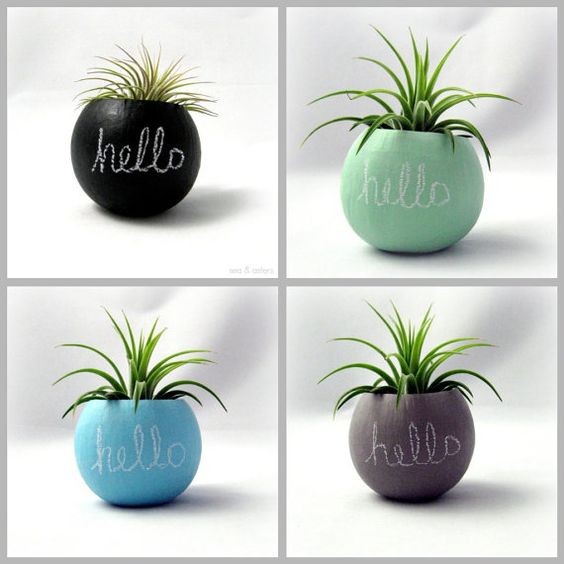Air Plant Pod // Hello Chalkboard  Choose Your by seaandasters, $14.00
