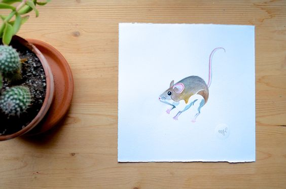 Painting by Marisa Pahl  Jumping Mouse Native Animals series watercolour on Fabriano CP paper nine inches by nine inches 2013   Hop on my email newsletter for collectors at www.marisapahl.com to hear when new prints are available!  #mouse #canada #painting #paint #watercolour #grey #pink #style #minimalist