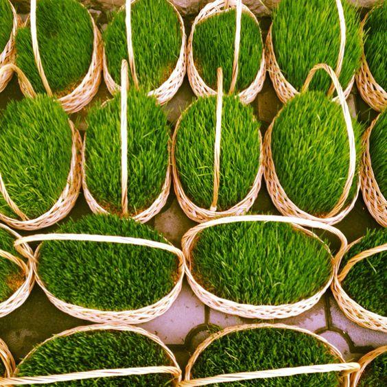 Green green grass!