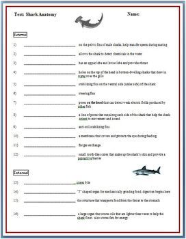 Shark Anatomy Worksheet & Test [Structures and Functions ...
