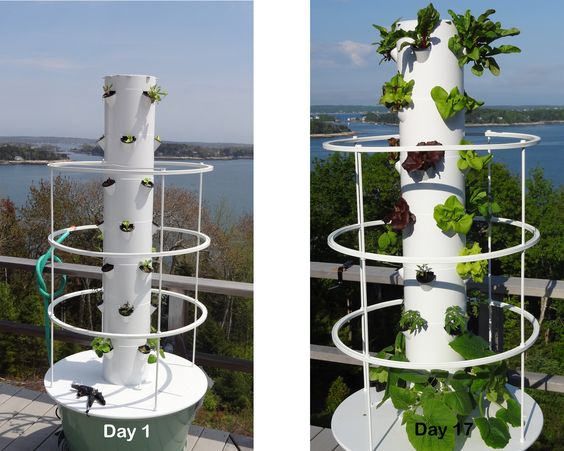 My Aeroponic Tower Garden at Day 17 from seed New England