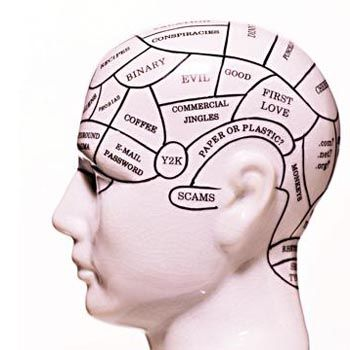 Not despond! human brain development newborn to adult phrase