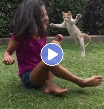 Gatinho atacando a garota, ela entra em desespero