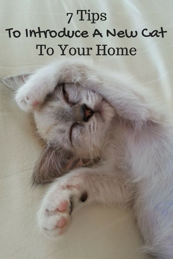 7 Tips To Introduce A New Cat Or Kitten To Your Home Introducing A New Cat Cat Care Cats