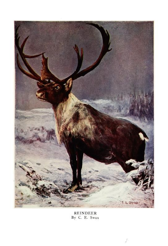 The wild beasts of the world; - Biodiversity Heritage Library