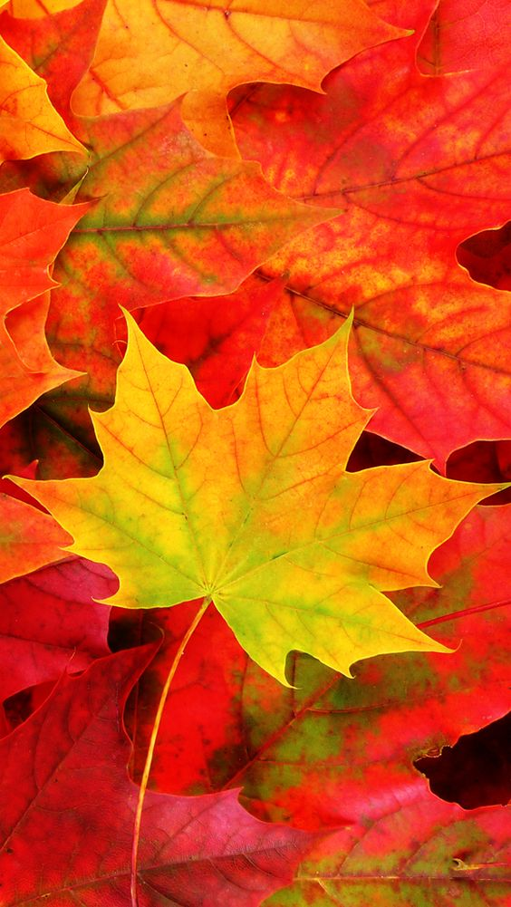 Fall Five -- iPad 5 Wallpaper   iPhone 5 Wallpaper ...