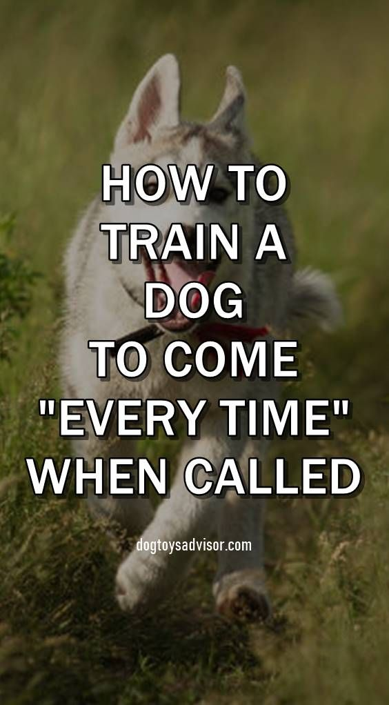 Do You Want Your Dog To Come Every Time When Called Most Dog