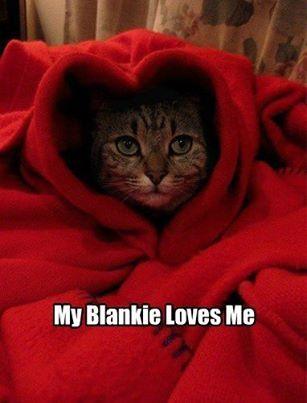 Internet Cats: