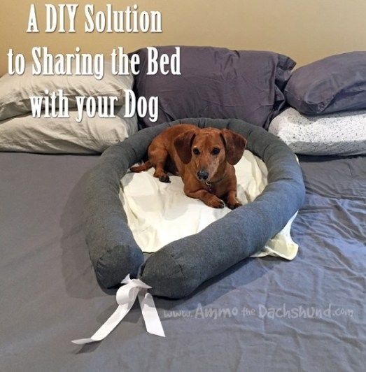 A Diy Solution For Sharing The Bed Comfortably With Your Dog Ammo The Dachshund Big Dog Beds Your Dog Dogs