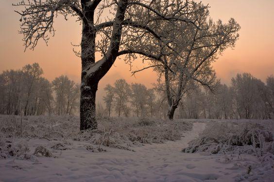 Криволуцкий Игорь - Начало зимнего дня